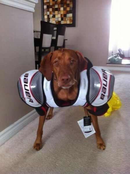 dogs shoulder pads football