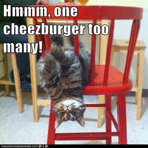 Cheezburger Image 7121915904