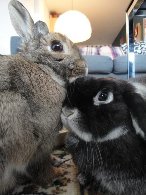 Bunday bunnies snuggles PDA squee rabbits - 7121956352