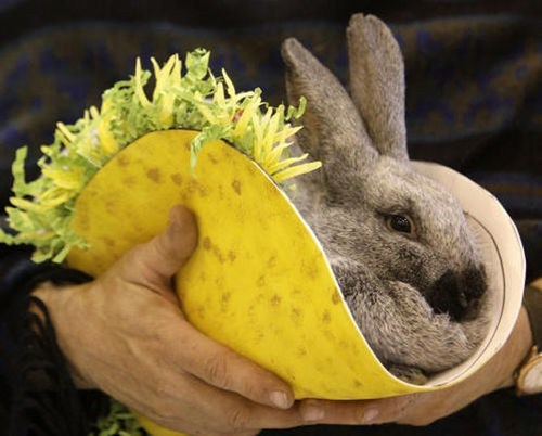 Bunday bunnies spanish tacos squee rabbits - 7121974784