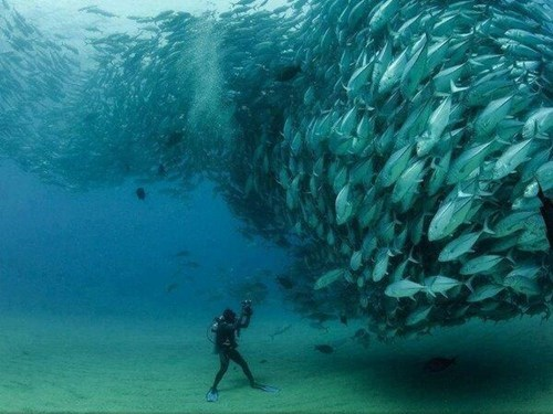 scary,oceanography,science,school of fish