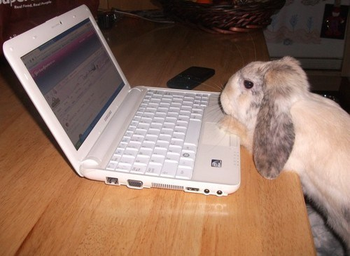 Bunday,laptops,bunnies,computers,squee,rabbits
