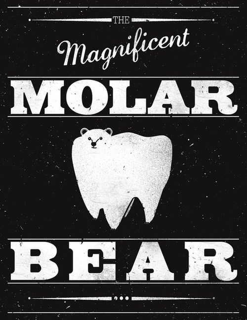 polar bear teeth molar - 7122072064
