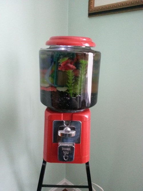 pets,design,aquarium,gumball machine