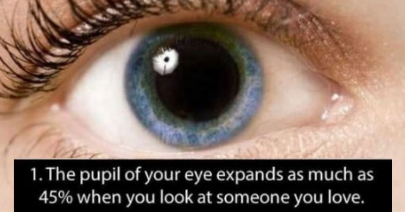 Fun Fact trivia interesting eyes body - 7122437