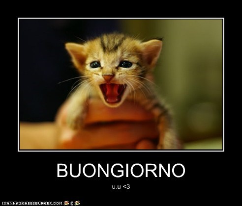 Buongiorno Lolcats Lol Cat Memes Funny Cats Funny Cat Pictures With Words On Them Funny Pictures Lol Cat Memes Lol Cats