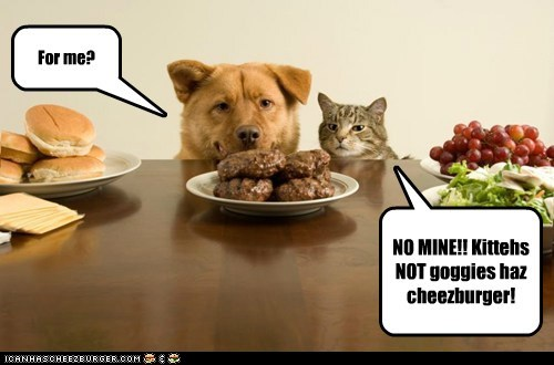 NO MINE!! Kittehs NOT goggies haz cheezburger! For me?