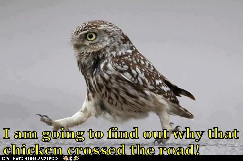 determined,crossing the road,owls,mystery,why
