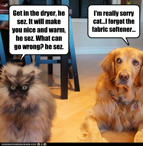 Get in the dryer, he sez. It will make you nice and warm, he sez. What can go wrong? he sez. I'm really sorry cat...I forgot the fabric softener...