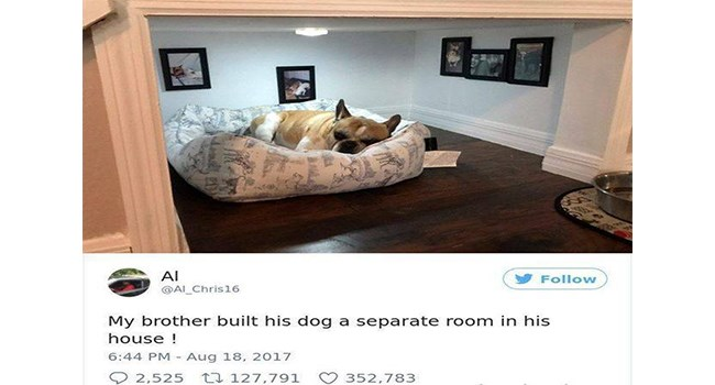pets living the life of luxury