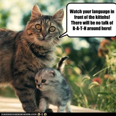 kitten bath mom Cats - 7126147584