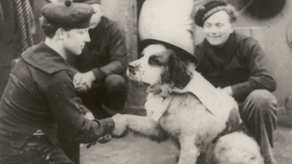 Tweets about a dog that fought in the war