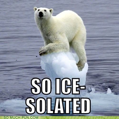 polar bear isolated literalism prefix ice