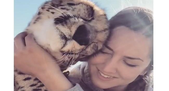 videos instagram cute funny cats cat videos Cats - 7127045