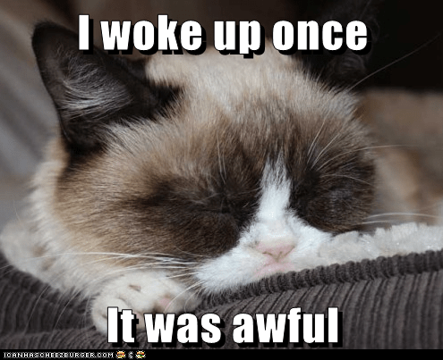 Grumpy Cat tardar sauce sleep Cats