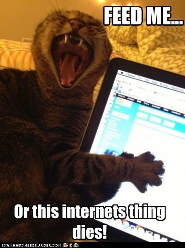 internet food Cats - 7127385088