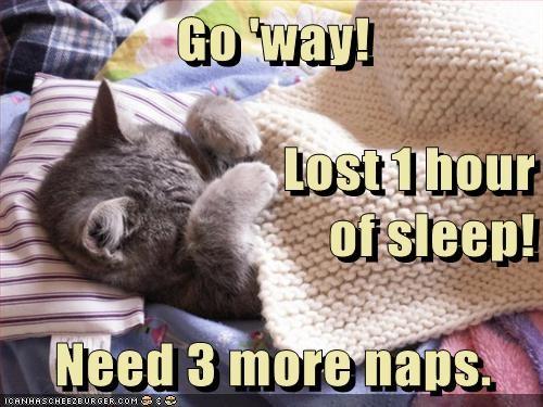 kitten bed sleep Cats - 7127531264