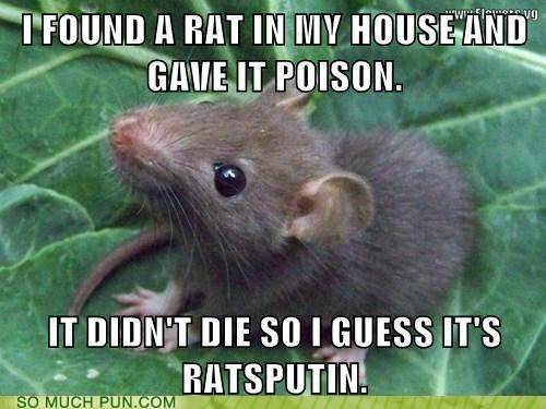 rat rasputin legend poison similar sounding prefix