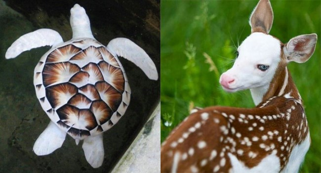 amazing photos of animals of different colors and patterns