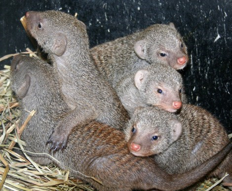 Babies mongoose winner squee spree squee