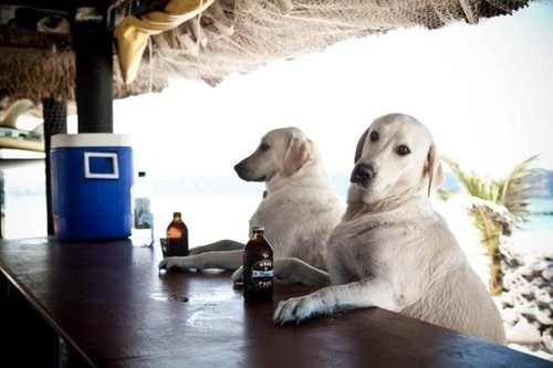 dogs crunk critters spring break - 7130283264