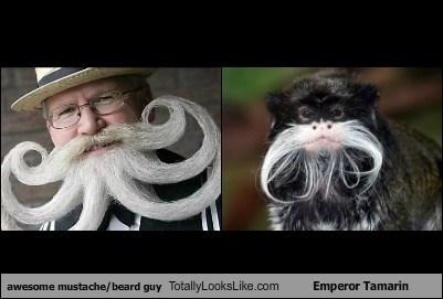 TLL,emperor tamarin,mustaches,beards