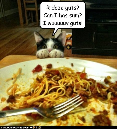 gross spaghetti guts noms Cats - 7130995456