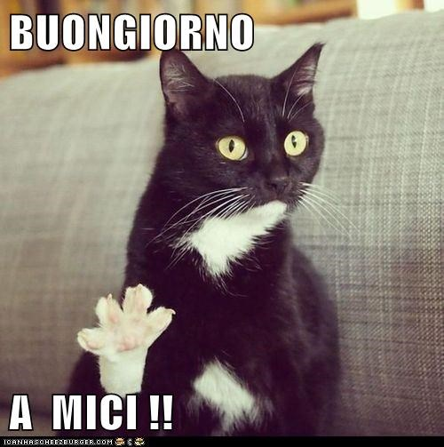 Buongiorno A Mici Lolcats Lol Cat Memes Funny Cats Funny Cat Pictures With Words On Them Funny Pictures Lol Cat Memes Lol Cats