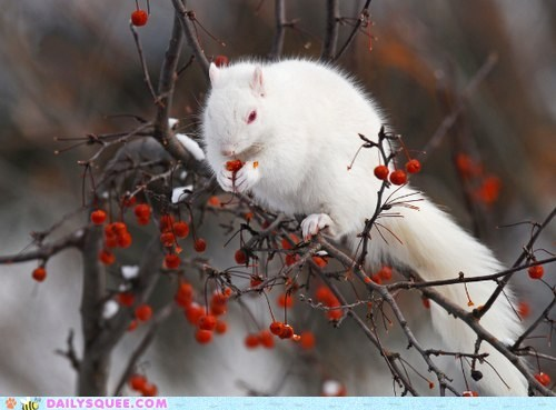 albino,squirrel
