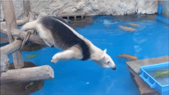 gifs ducks stael anteater food Video animals - 7132421
