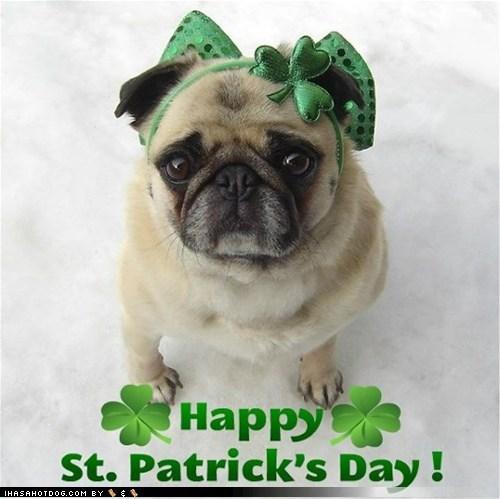 Dog - Happy St. Patrick's Day! IHASAHOTDOG.COM BY ¢