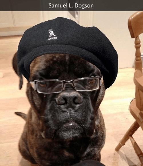 dogs,lookalikes,Samuel L Jackson
