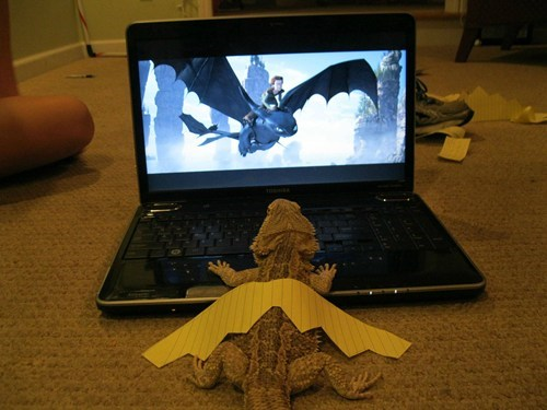 Movie,imagine,pretend,bearded dragon,How to train your dragon,laptop