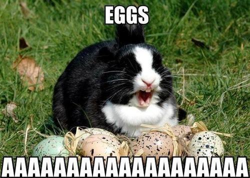 easter eggs bunny rabbits - 7132902912