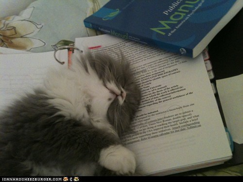 biscuit cat scholar books sleep - 7132977152