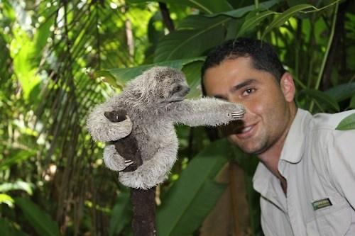 cute sloth - 7132978688