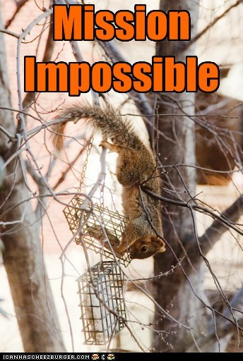 squirrel,mission impossible