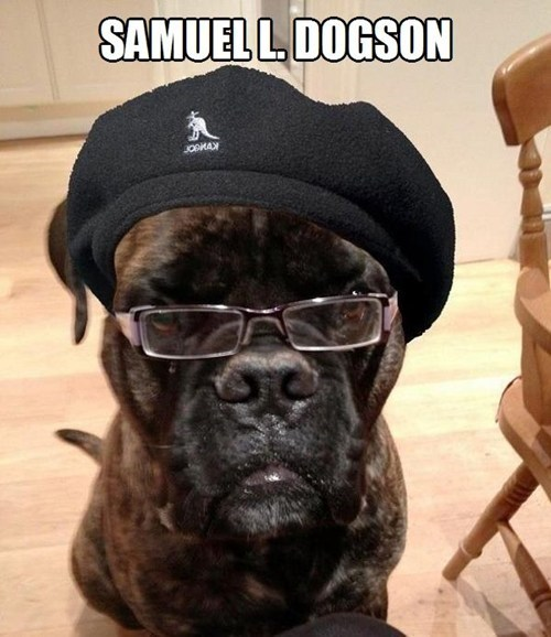 Very funny picture of a dog that looks like Samuel L. Jackson photo shopped to include his glasses and hat to REALLY make it look like his doppelganger dog version