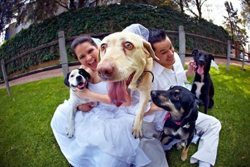 dogs fisheye weddings - 7133103616