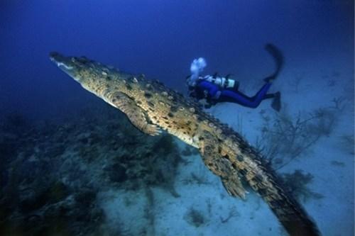 crazy scuba animals - 7133162752