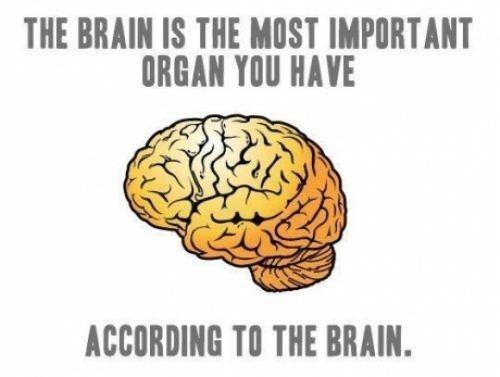 brain,organ