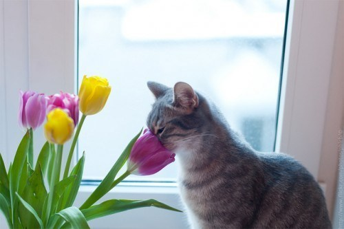 Cyoot Kitteh of teh Day: Face Full of Spring