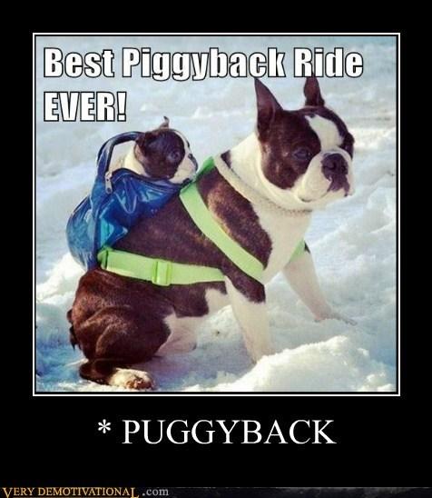 wtf pug piggy bag - 7133508864