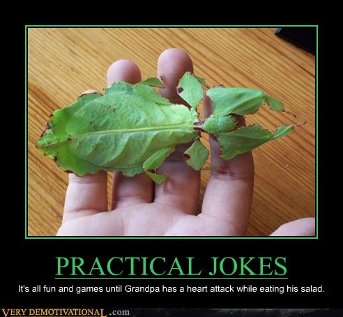 leaf bug practical jokes salad