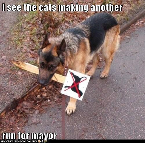sign,mayor,Cats
