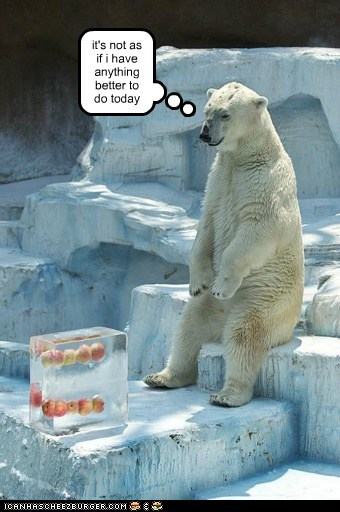 polar bear,frozen