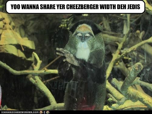 Cheezburger Image 7134430208
