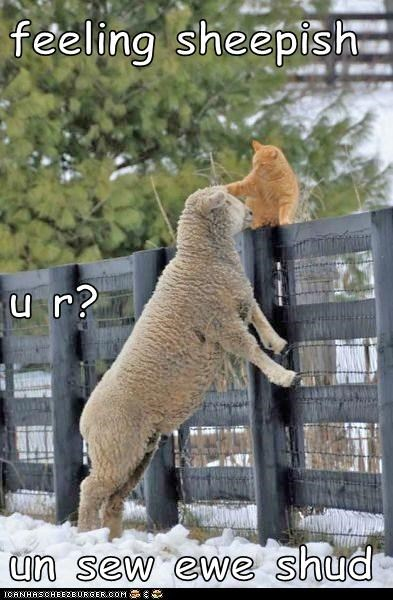 Feeling Sheepish U R Un Sew Ewe Shud Lolcats Lol Cat Memes