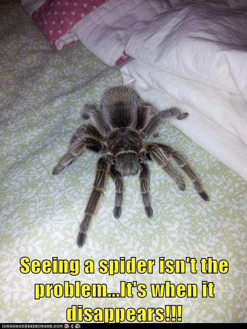 spider wise words - 7134817536