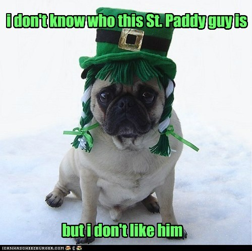 Pug - idont know who this St. Paddy guy is butidon't like him CANHSCHEE2EURGER 0OM